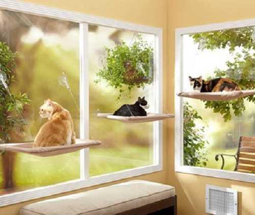 i gatti sognano2