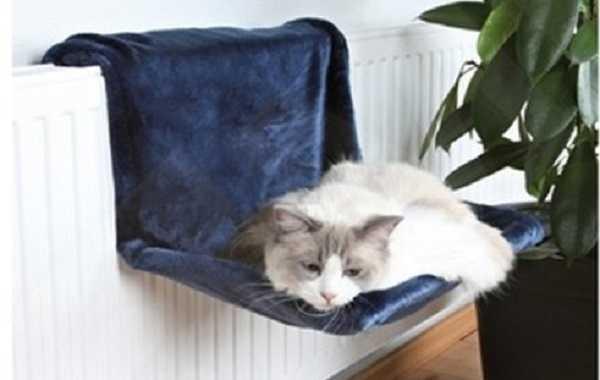 i gatti sognano3