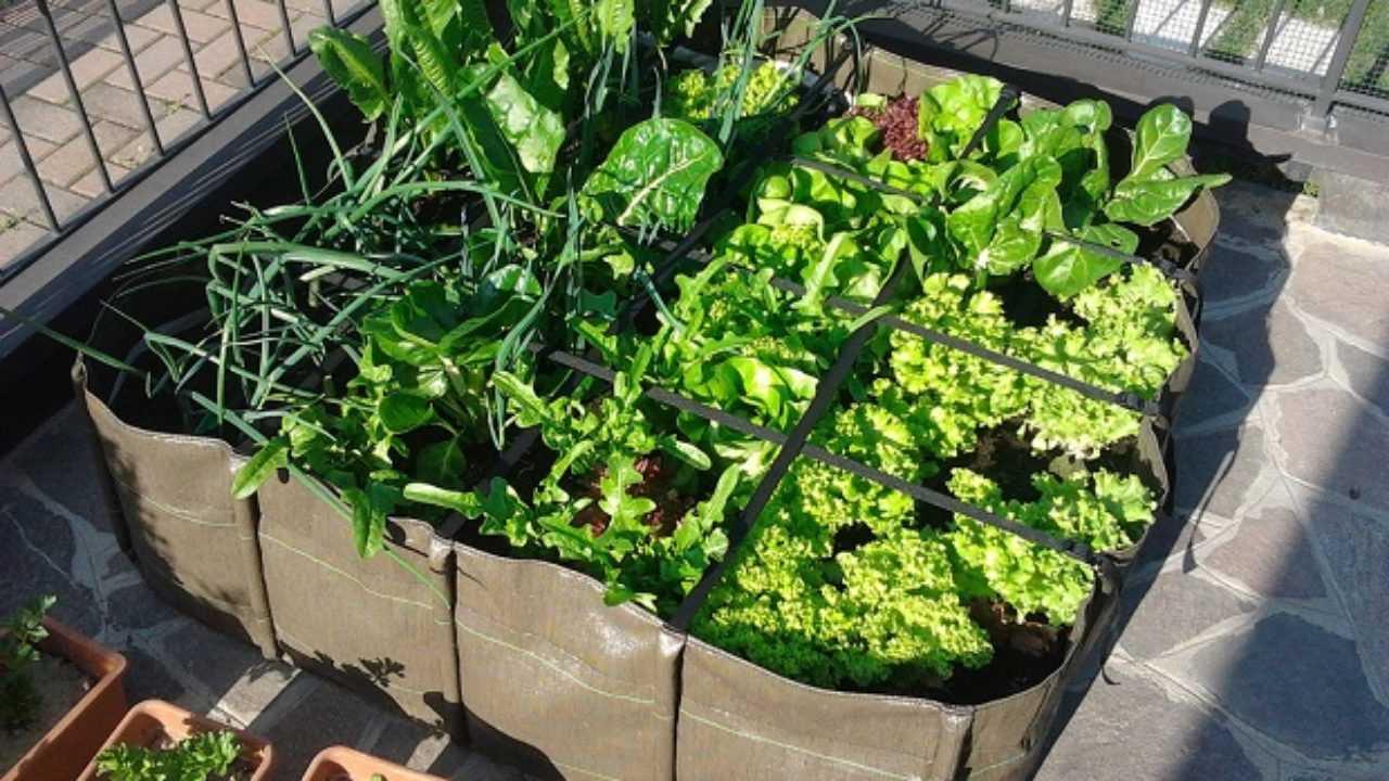 Come Coltivare Pomodori Sul Balcone ortaggi da seminare sul balcone a primavera - idee green