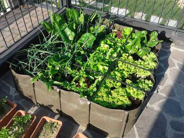 ortaggi da seminare sul balcone a primavera idee green