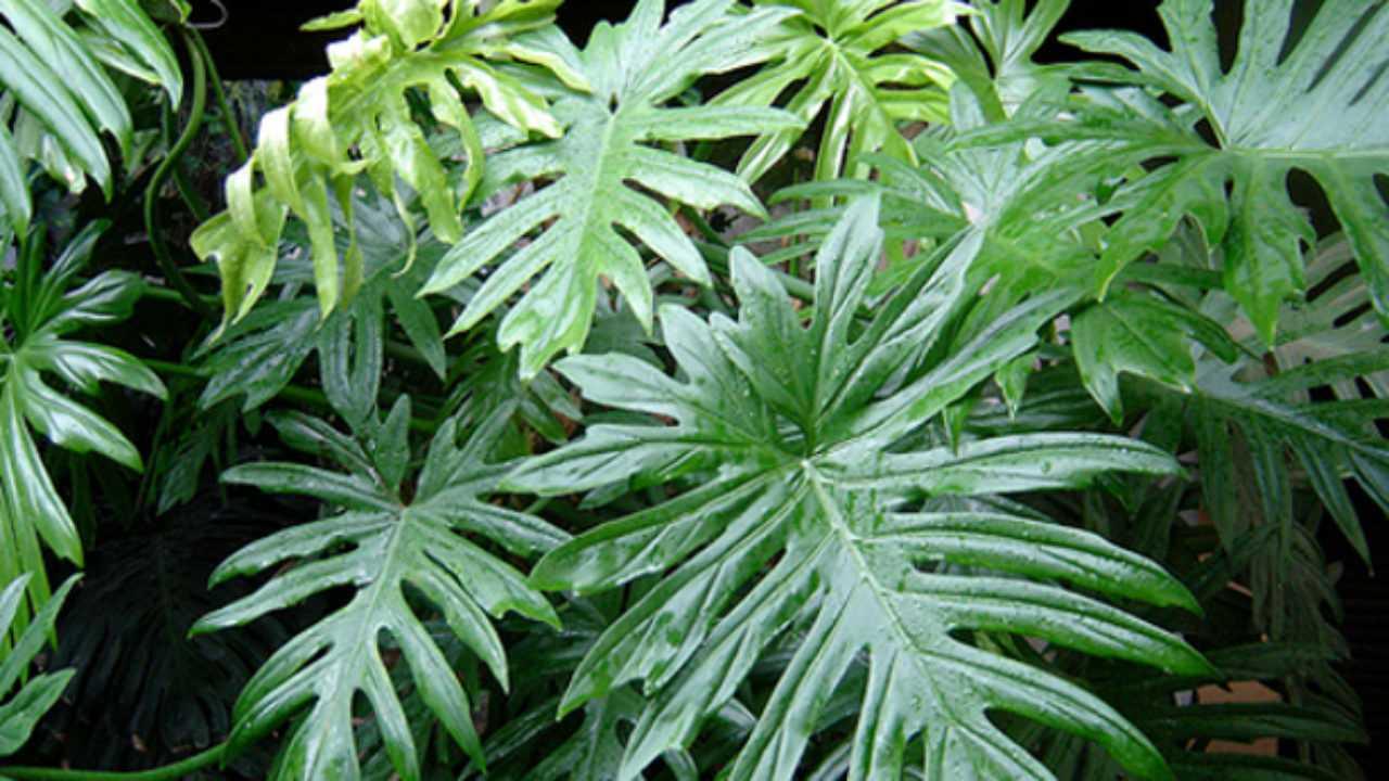 Piante Strane Da Appartamento piante in casa facili da coltivare - idee green