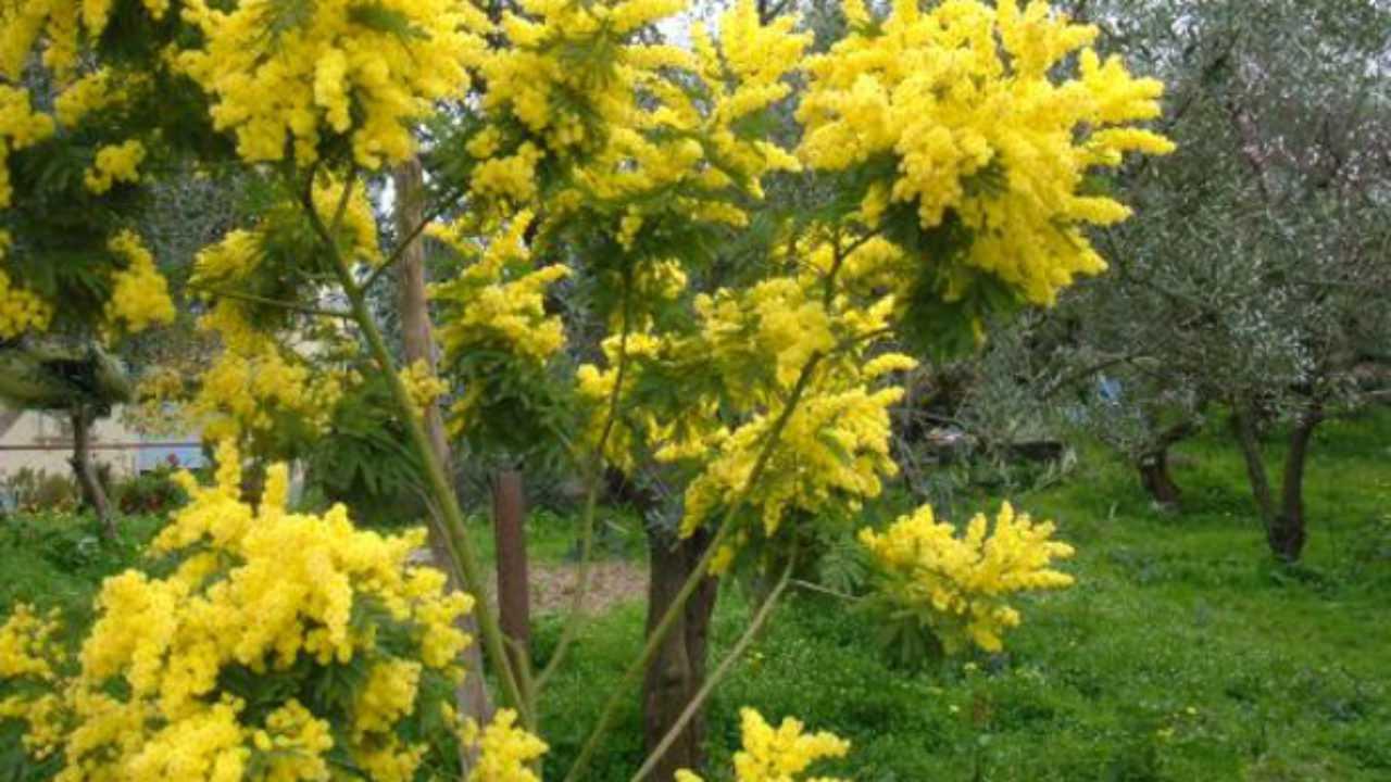 Piante Piccole Da Giardino piante ornamentali da giardino - idee green