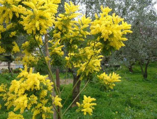 Piante ornamentali da giardino idee green - Piante particolari da giardino ...