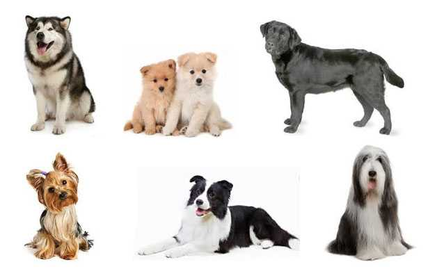 Razze di cani: elenco completo