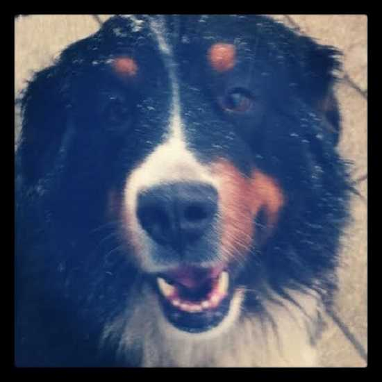 shampoo per cani4