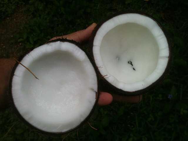 Come usare l'olio di cocco