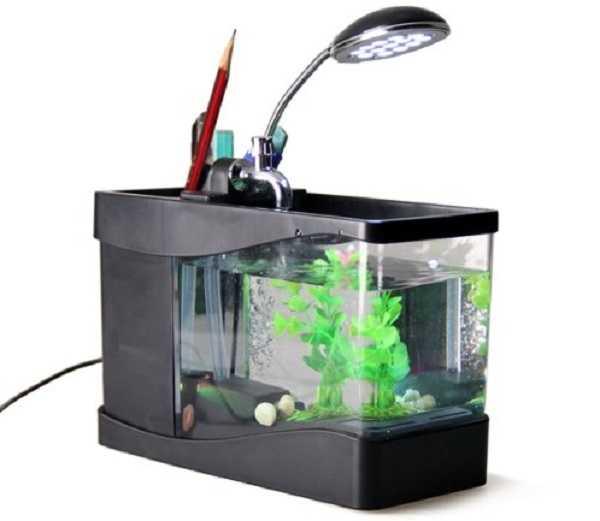 acquario per pesci rossi come allestirlo idee green