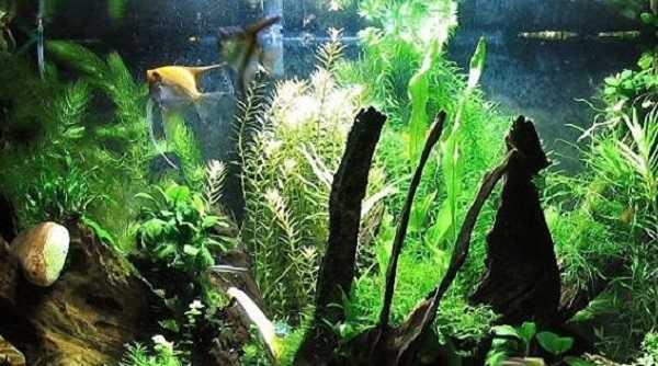 acquario pesci rossi6