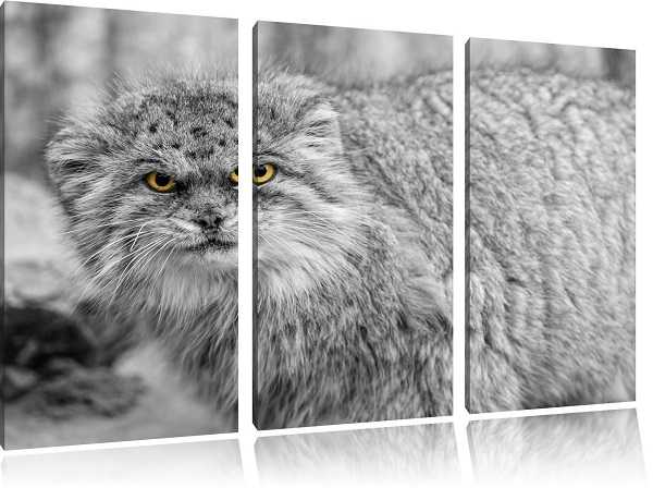 gatto arrabbiato2
