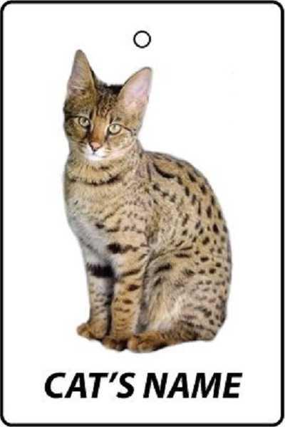 gatto savannah1