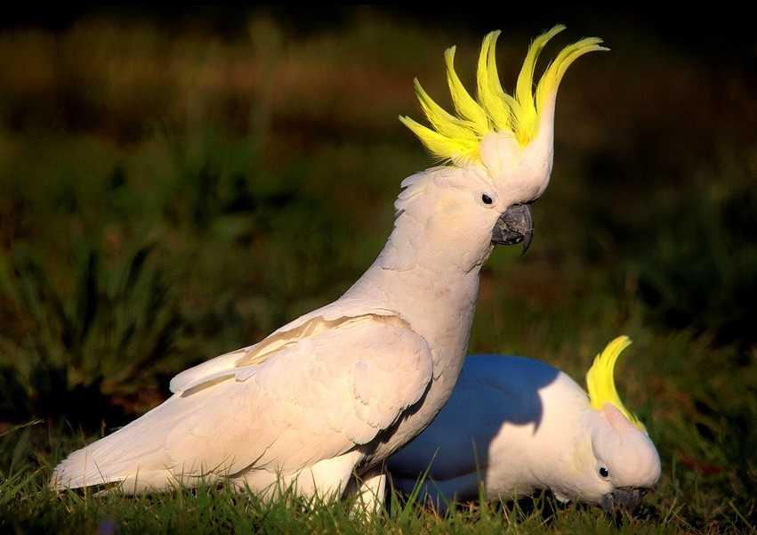 pappagalli parlanti6
