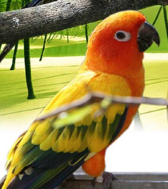 pappagalli parlanti7