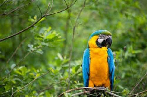 pappagalli parlanti8