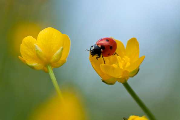 piante che attirano insetti utili