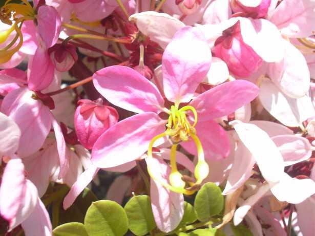 Piante fiorite primaverili idee green - Piante fiorite ...