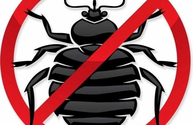 rimedi contro scarafaggi in casa
