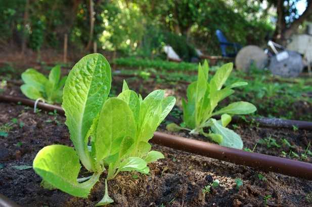 sistema di irrigazione fai da te idee green