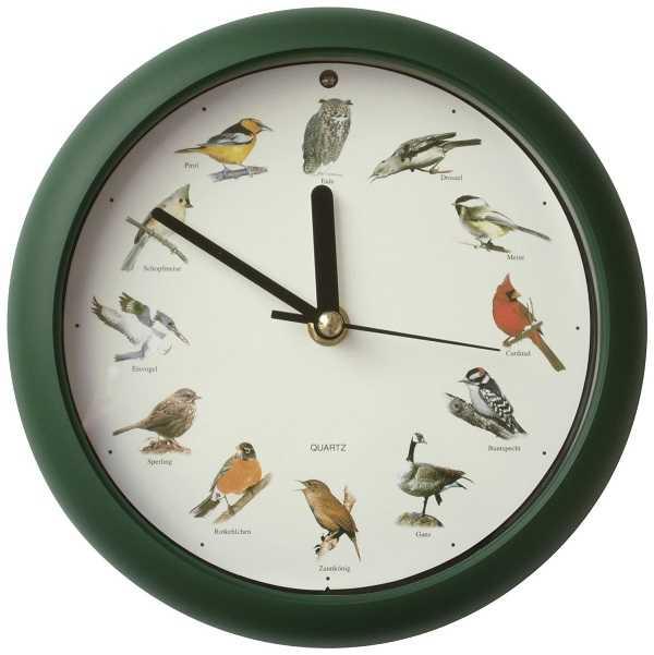 uccelli da compagnia4