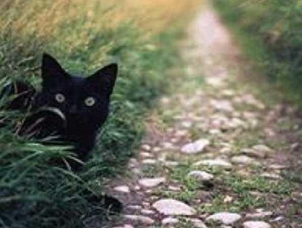 zecche gatticome toglierle5
