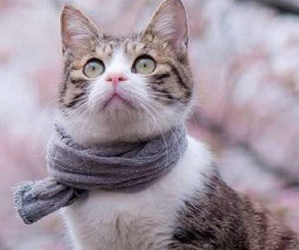 collare antipulci gatto3