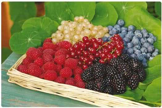 come coltivare i frutti di bosco