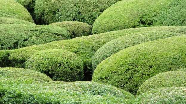 Come Potare Piante : Come potare una siepe informazioni utili idee green