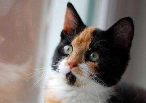 congiuntivite gatto2