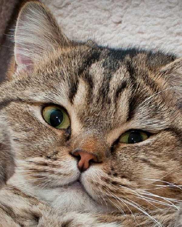 congiuntivite gatto3