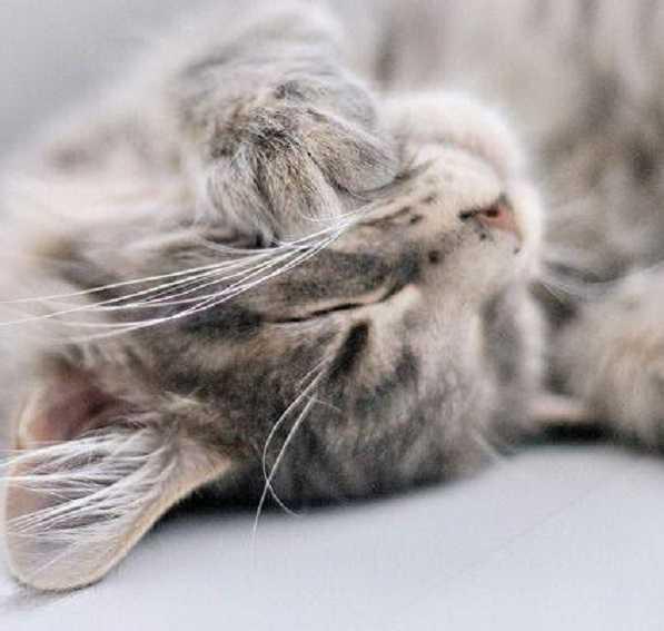 congiuntivite gatto4
