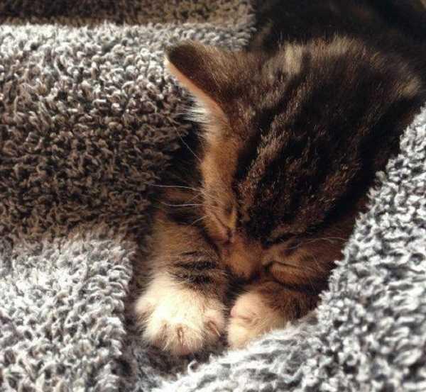 gatto con raffreddore4