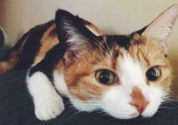 gatto con raffreddore5