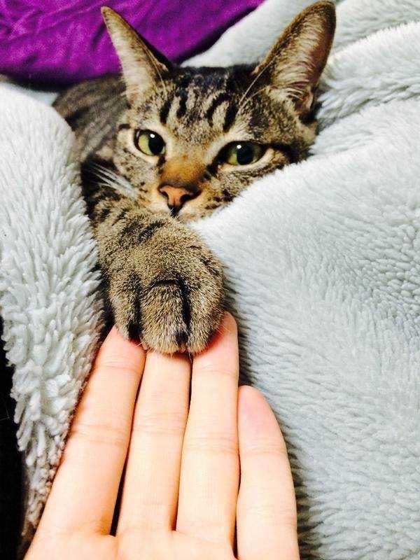 gatto con raffreddore6