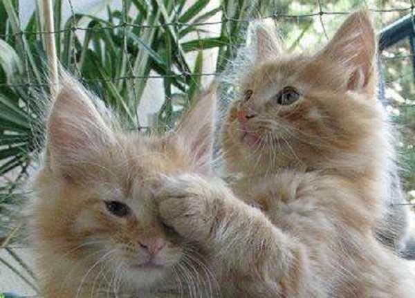 gatto con raffreddore7