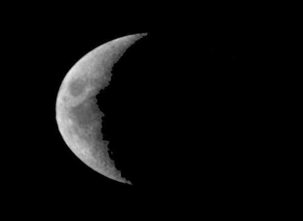 Calendario Innesti Pdf.Innestare Con La Luna Giusta Idee Green