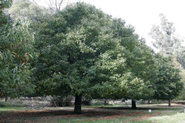 Malattie degli alberi