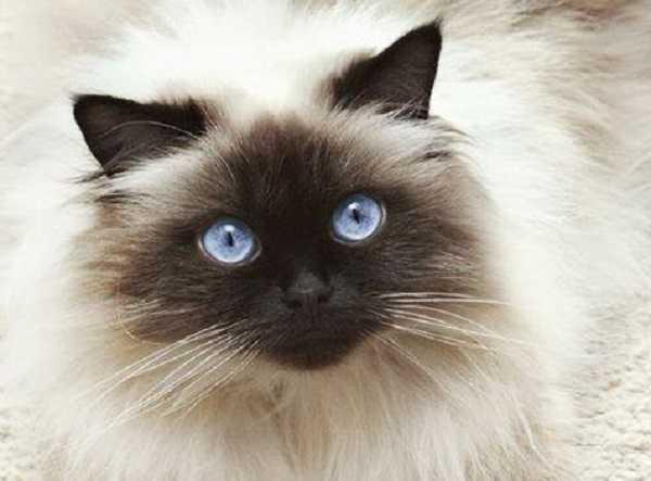 baffi dei gatti2