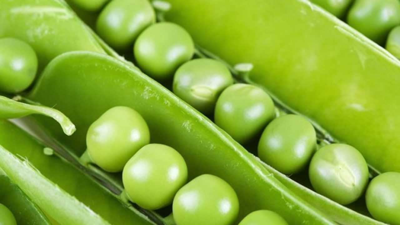 Coltivare Piselli In Vaso come coltivare i piselli in vaso - idee green