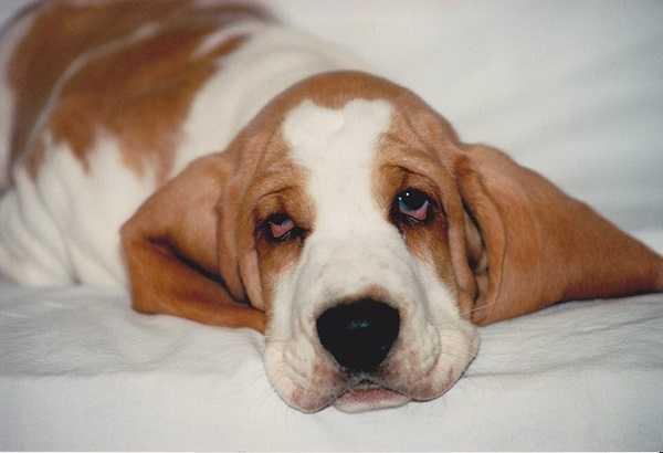 epilessia nei cani2