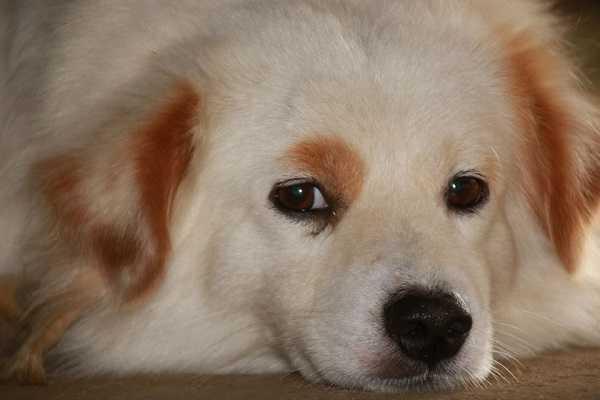 epilessia nei cani3