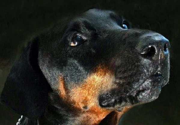epilessia nei cani4