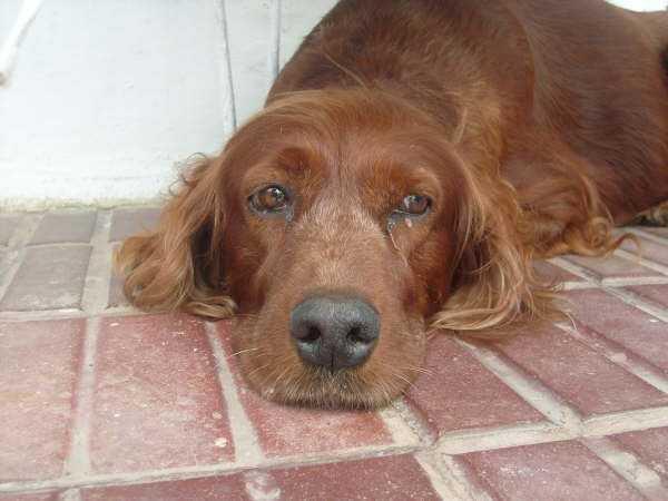 epilessia nei cani6