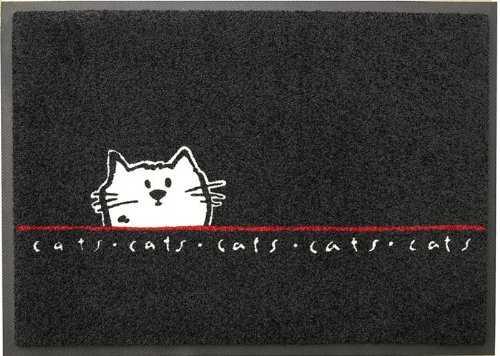 gatto bobtail giapponese1
