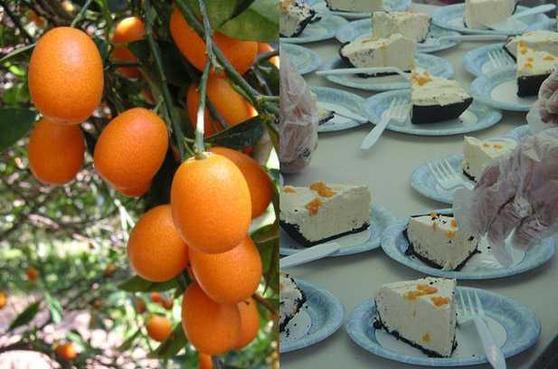 kumquat mandarino cinese ricette