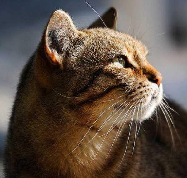 otite nel gatto 2