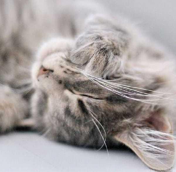 otite nel gatto 7