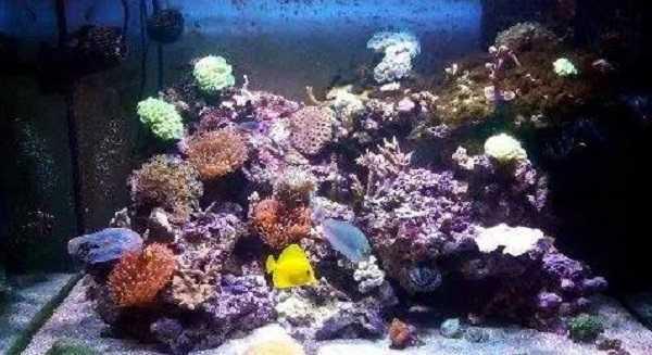 pesce pulitore2