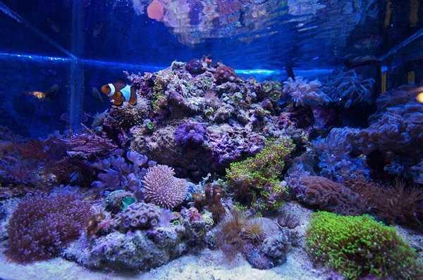 Pesce pulitore per l 39 acquario idee green for Acquario per pesci
