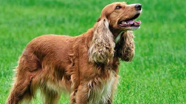 cane che ulula 6