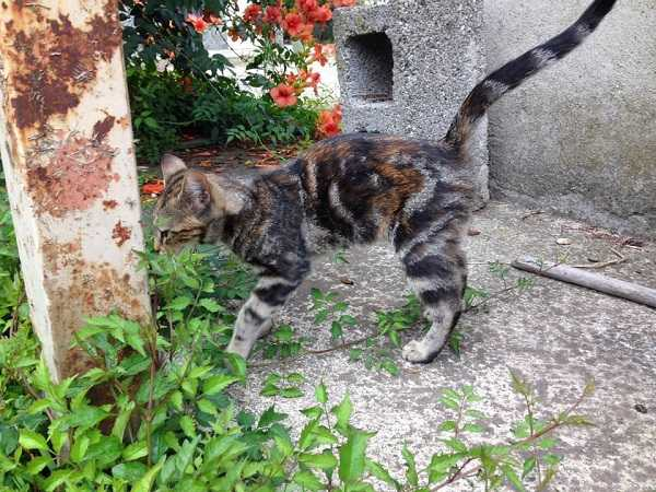 gatto maschio femmina
