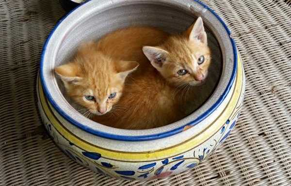 gravidanza dei gatti 3